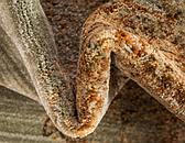 8' x 8' Graham Round Rug thumbnail image 7